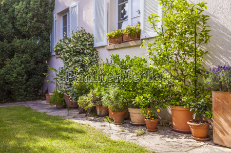 potted plants in front of house