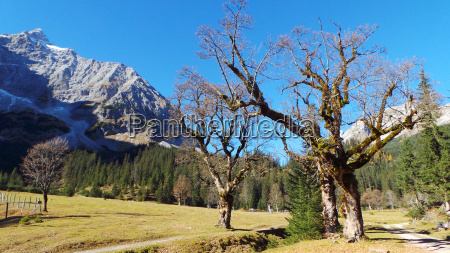 austrians conservation of nature maple tyrol