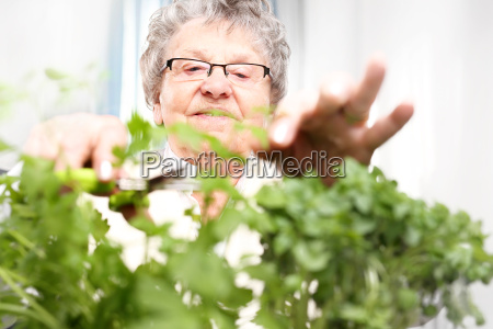 growing herbs in the home green