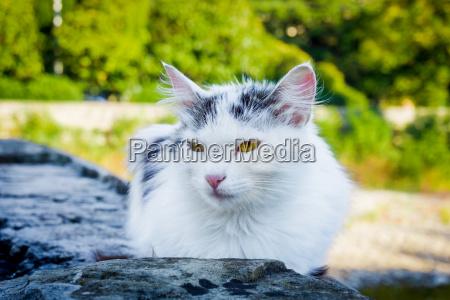 street cat white homeless