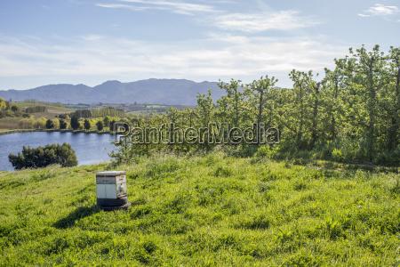 bee box near pear trees