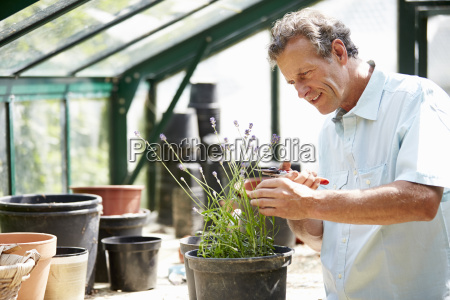 middle aged man working in greenhouse