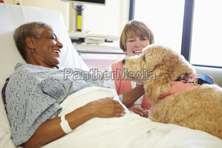 pet therapy dog visiting senior female