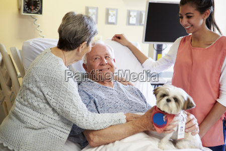 pet therapy dog visiting senior male