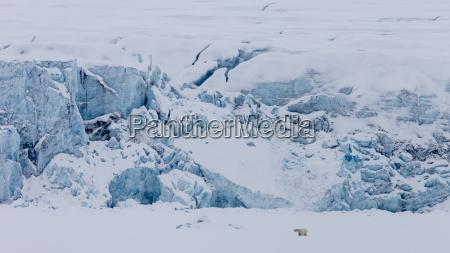 long exposure of polar bear in