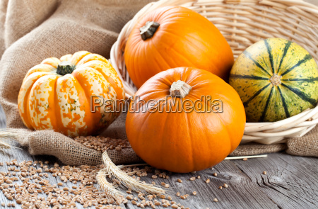 pumpkins on wood