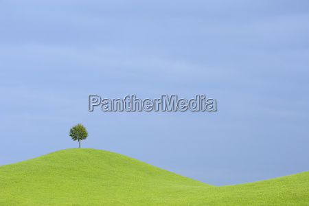 tree on hill canton of zurich