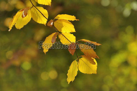 tree branch in autumn odenwald hesse