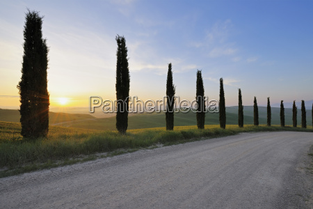 empty road with cypress trees at