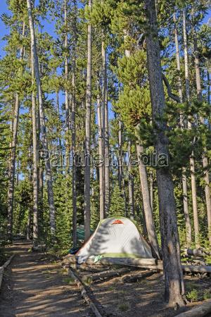 quiet campsite in the pines