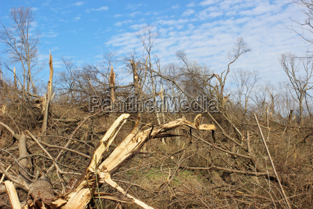 tornado aftermath in wooded area