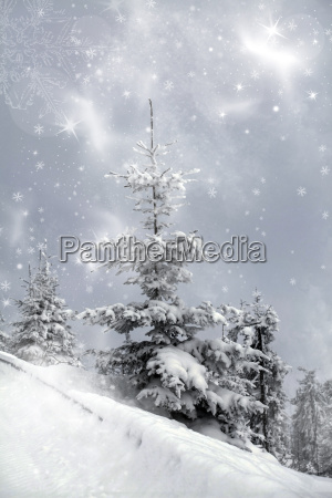 snow covered pine tree in the