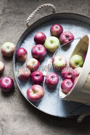 apples on tray overhead view