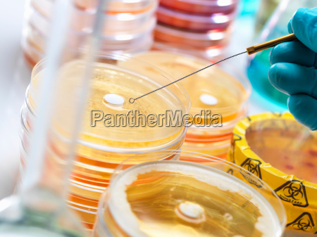 antibiotic drugs being tested to see