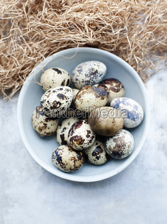 still life of fresh quails eggs