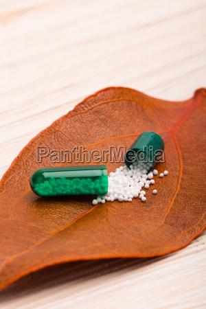 green opened capsule with orange leaf