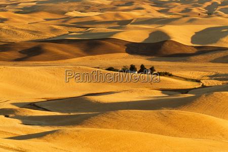 wheat fields viewed from steptoe butte