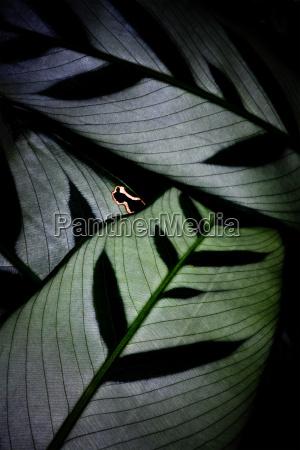 backlit leaf pattern