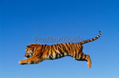 blu movimento in movimento animale gatto