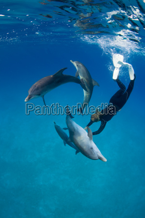 frolicking with dolphin