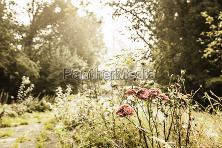 garden path overgrown with weeds and