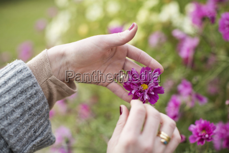 close up of womans hands tending