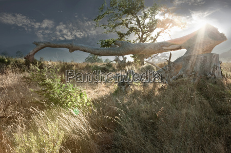 tree branches in rural landscape