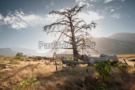 bare tree in rural landscape