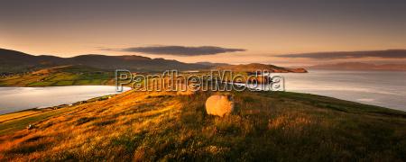 sheep grazing in rural landscape