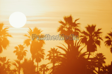sunset over palms at a beach