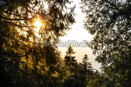 view of silhouetted mountain forest at
