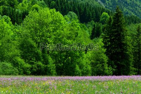 countryside near col de la faucille