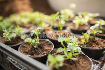 cropped view of potted seedlings differential