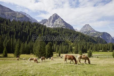 herd of horses grazing in valley