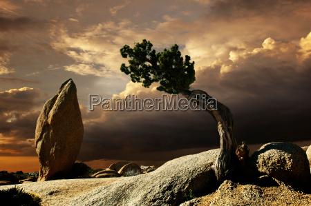 ethereal shot of landscape joshua tree