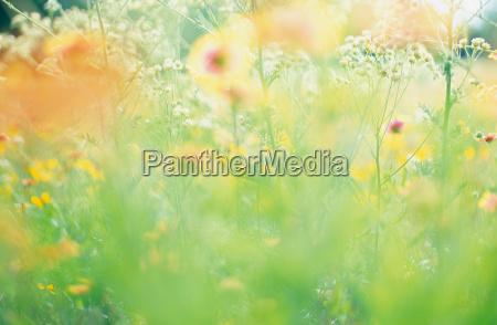 field of wildflowers in summer close