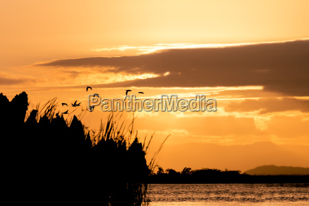 birds silhouette and sunset over the