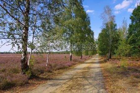 heath landscape in late summer
