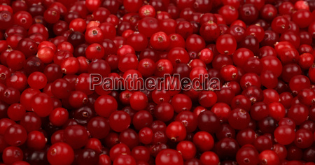 fresh red ripe cranberries background low
