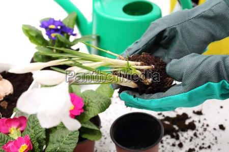 planting plants flower arrangement