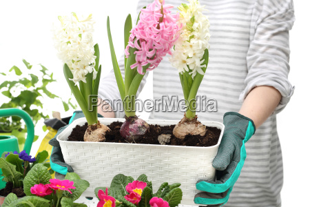 hyacinths spring flower arrangement