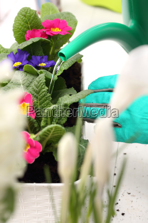 watering pot flowers home plant care