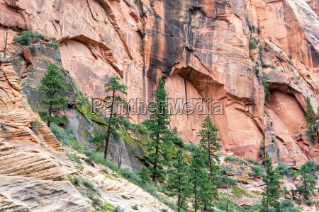 trees in zion canyon