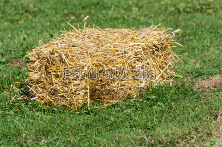 straw bales in a meadow