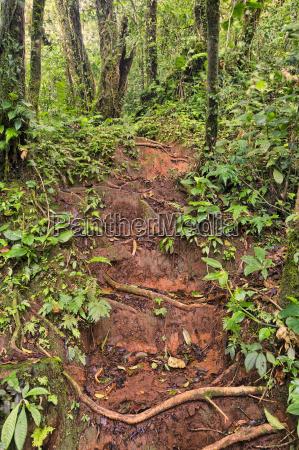 jungle trail costa rica