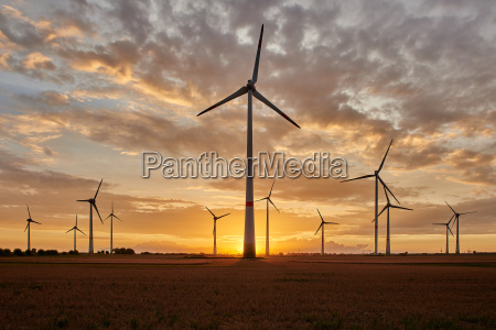 wind farm in the sunset
