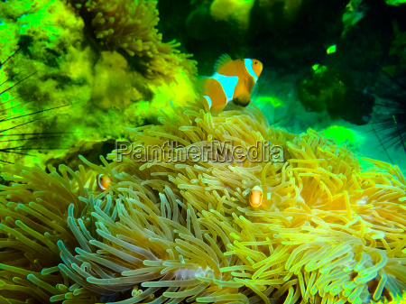 the colorful red coral reef with