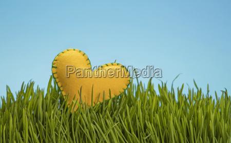 yellow felt heat in green grass