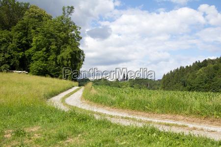 gravel road between meadows and woods