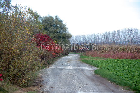 wet gravel road between fields and